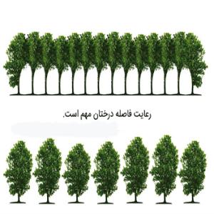 فاصله مناسب بین درختان